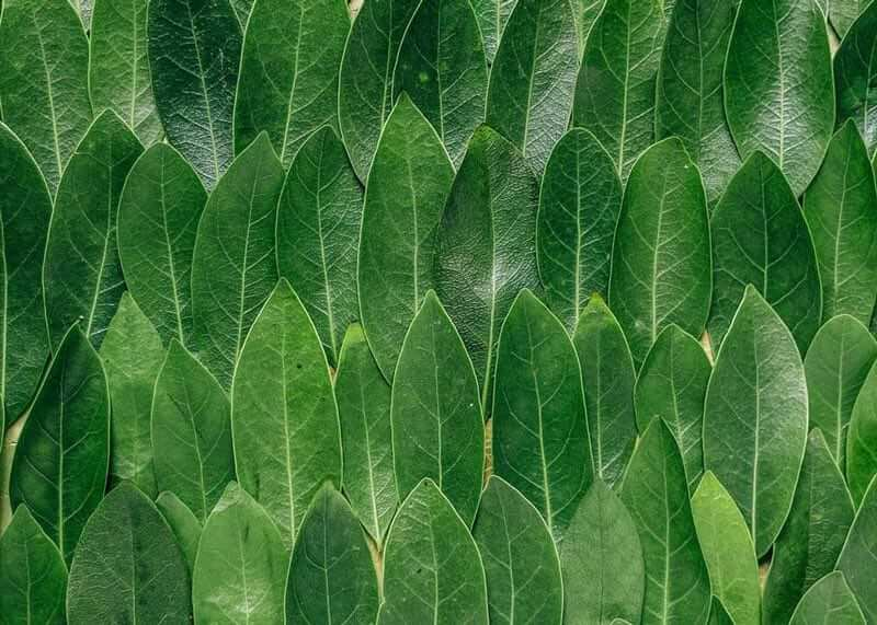 Green leaves in 4 rows