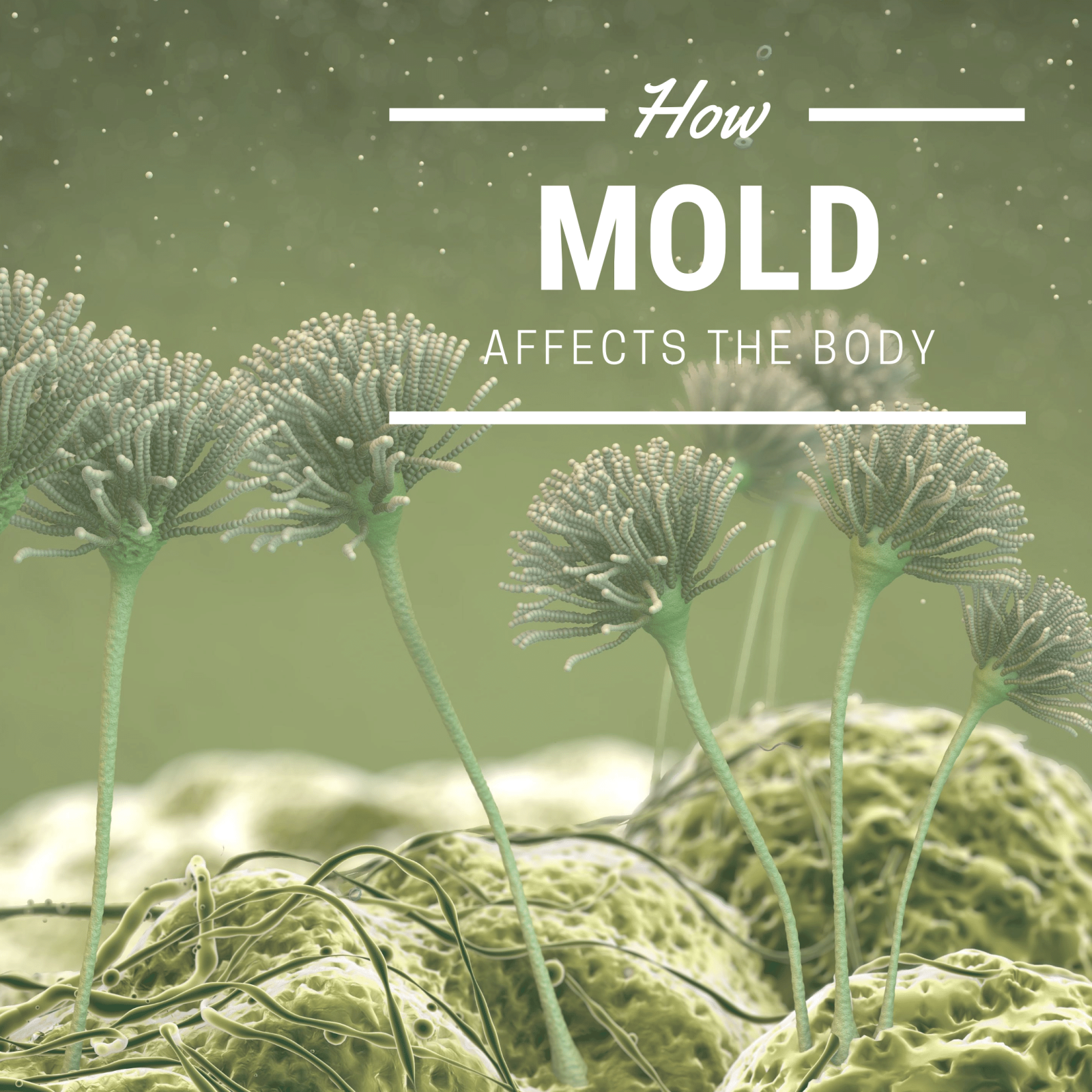 How Mold Affects the Body-min